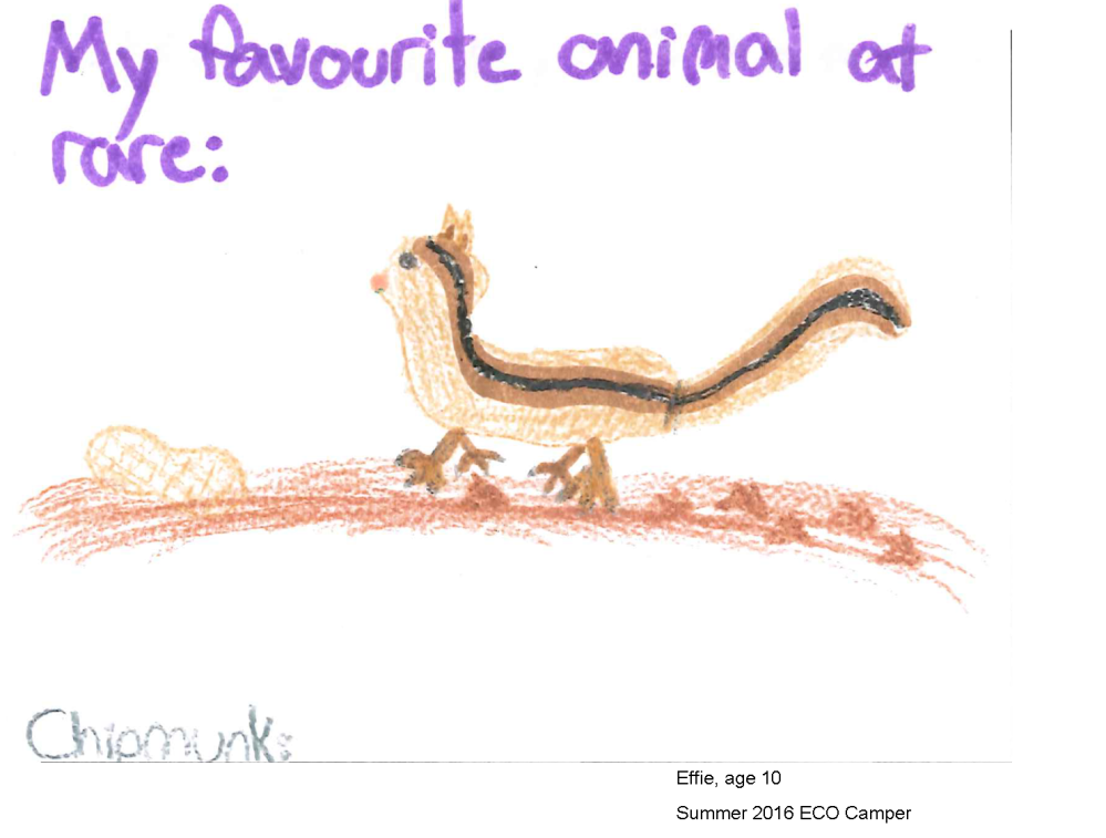 eco-postcard-activity-effie-favourite-animal